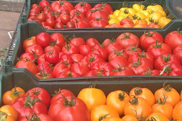 Nettles Farm tomatoes